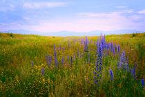 Blooming field  von larisa-koshkina