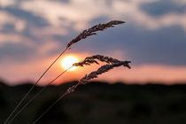 Grass Sunset von Roger Green