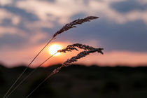 Grass Sunset by Roger Green