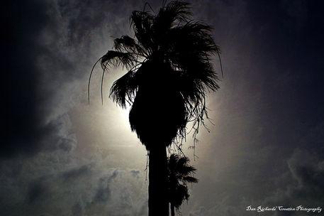 Palm1d