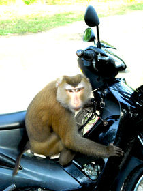 Monkey on speed by m-r-concepts