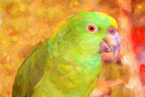 Amazon Parrot von gravityx9