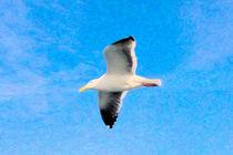 Sea Gull in Flight von gravityx9