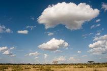 African Landscape von Antonio Jorge Nunes