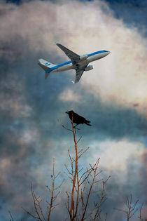 Crow-plane-2