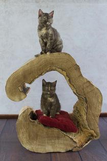 Kätzchen / 2 von Heidi Bollich