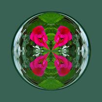 Flower Globe by Robert Gipson
