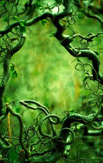 Curly tree branches  von Jarek Blaminsky