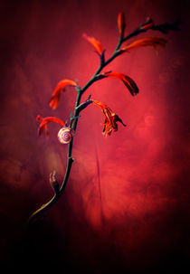 Red flowers and white snail shell by Jarek Blaminsky