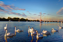 Graceful Swans by David Pyatt