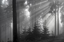 Feldberg   Tannen im Nebel by andreas-hendrik
