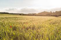Sonnenuntergang mit Mohnblumen im Kornfeld   Piemont by andreas-hendrik