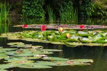 Hommage an Monets Seerosen by andreas-hendrik