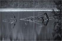 Waldsee von Bernd Müller