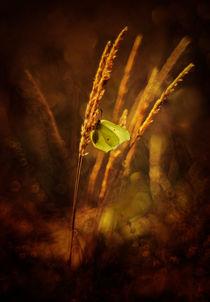 Golden hour by Jarek Blaminsky