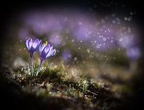 Spring impression I von Jarek Blaminsky