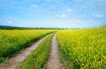 The road between the gold fields  von larisa-koshkina