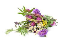 bouquet of wildflowers  by larisa-koshkina