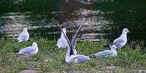 Vogel-V und sieben Möwen von Sabine Radtke