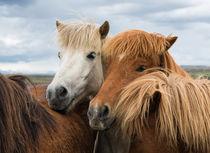 Pferde in Island - Horses in Iceland by Matthias Hauser