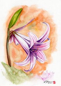 Lily by Rodrigo Chaem
