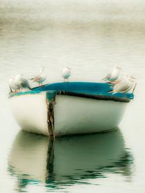 Seagulls in boat.