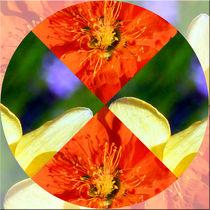 """Viererbild """"Blütenkreis"""" von lisa-glueck"""