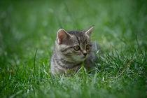 Kätzchen / 8 von Heidi Bollich