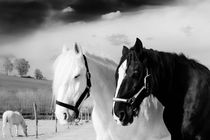 Black and White von Jake Playmo