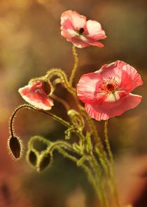 Pink impression by Jarek Blaminsky