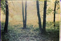 Bright glade by Alexander Kurganov