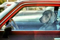 Doggy driver by Vincent Monozlay