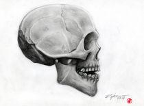 Skull by Rodrigo Chaem