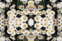 Daisy-kaleidoscope-2