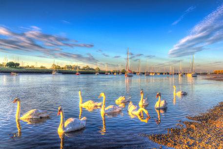 Sun-swans