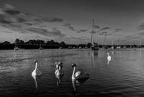 Summer evening swans by David Pyatt