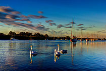 Graceful evening swans by David Pyatt