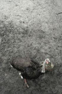 ostrich by Katia Terpigoreva
