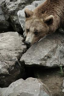 bear#2 by Katia Terpigoreva
