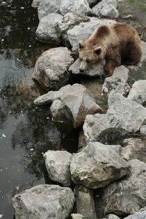 bear by Katia Terpigoreva