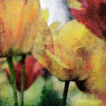 Tulpen II von Wolfgang Rieger
