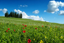 Spring Time in Italy von Antonio Iannalfi