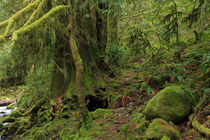 Temperate rainforest of Goldstream Park, Vancouver Island von Louise Heusinkveld