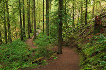 Temperate Rainforest of the Pacific Northwest von Louise Heusinkveld