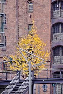 Hamburg, Herbst Hafencity - autumn Harbourcity 1 von Marc Heiligenstein