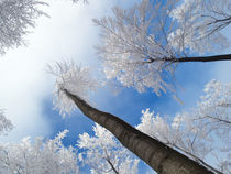 Winterwald | Frosty Trees (Oberhof - Thüringen) by photostrecke