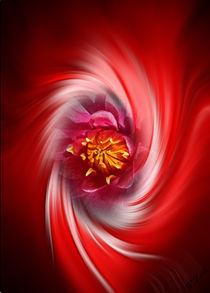 Blütenträume 20 Seerose by Walter Zettl