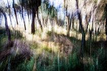 Lost in the Woods von Marc Garrido Clotet