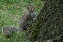 squirrel new york central park by Joseph Borsi