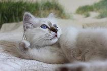Das Kätzchen / The kitten von Marcus Skupin